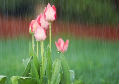 rain2 (1)