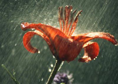 rain3 (1)